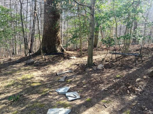 fallbreeze-before-back-yard-moss